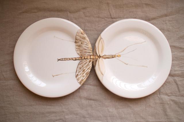 Insecto en 2 platos, es genial!
